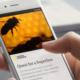 Eine Hand hält ein Handy, auf dessen Bildschirm ein Zeitungsartikel über Bienen angezeigt wird.