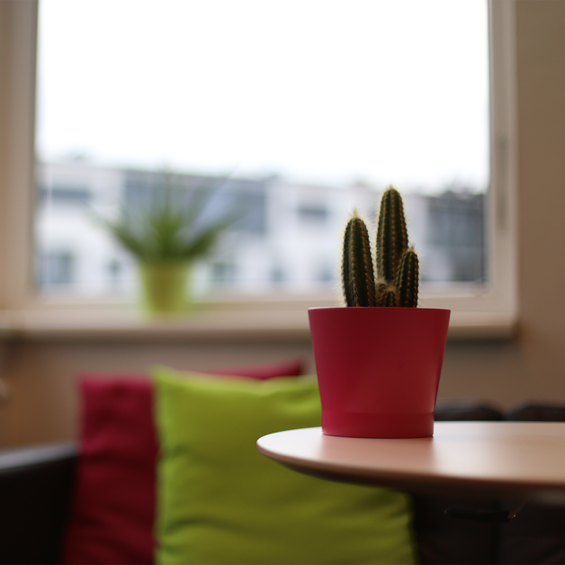 Auf dem Bild sieht man einen Kaktus in einem rosa Topf auf dem Couchtisch im Verwaltungsraum.