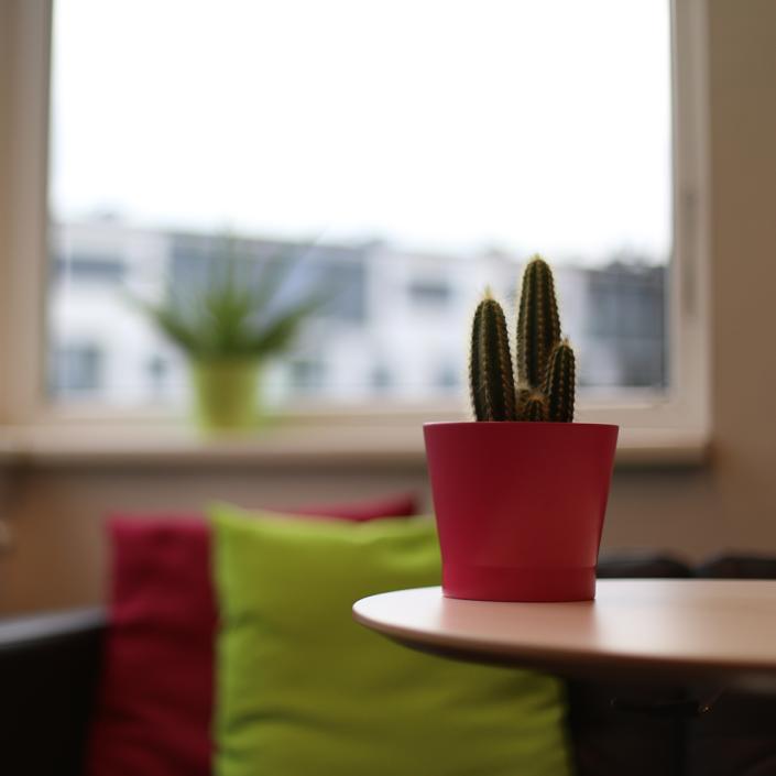 Auf dem Bild sieht man einen Kaktus im rosa Topf vor der Couch und dem Fenster im Verwaltungsraum.
